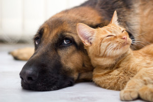 River House Pet Sanctuary - please consider fostering pets in need