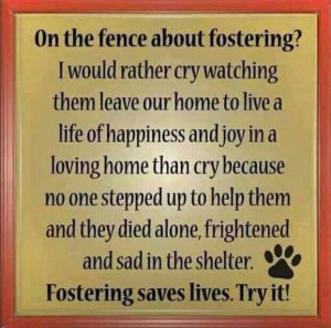 Fostering saves lives...try it!